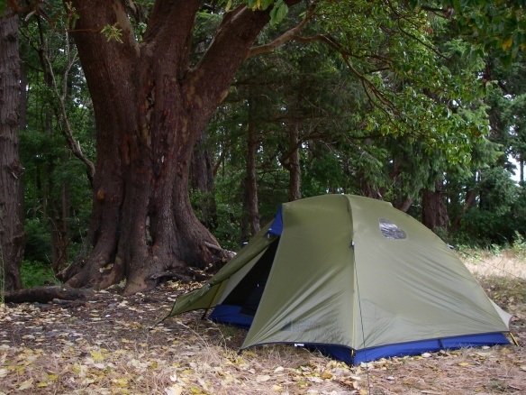 tent under the trees