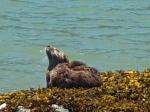 otter on the beach