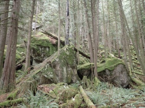 a pile of ancient boulders among the trees