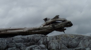 a driftwood log forms the outline of a dragon