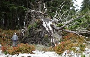 lean-to built against a fallen tree