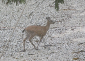 a deer on beach