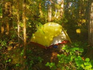 A tent in the woods at Rescue Bay, Susan Island, British Columbia