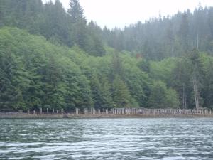 The ruins at Swanson Bay, British Columbia