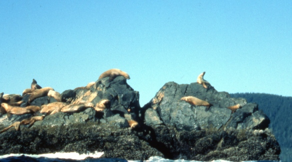 sea lions on a rock reef