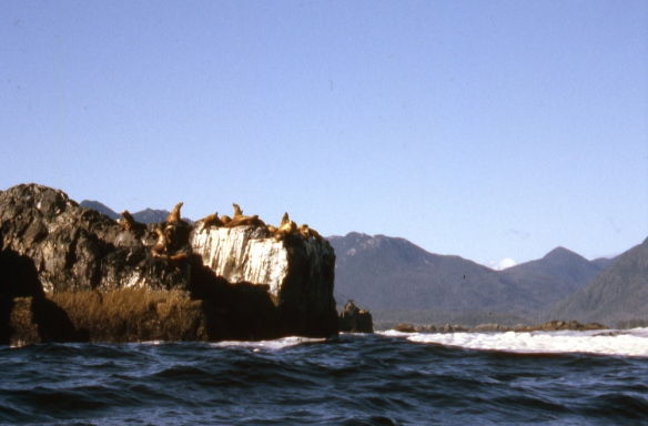 sea lions on a rocky cliff